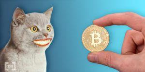 Bitcoin gato