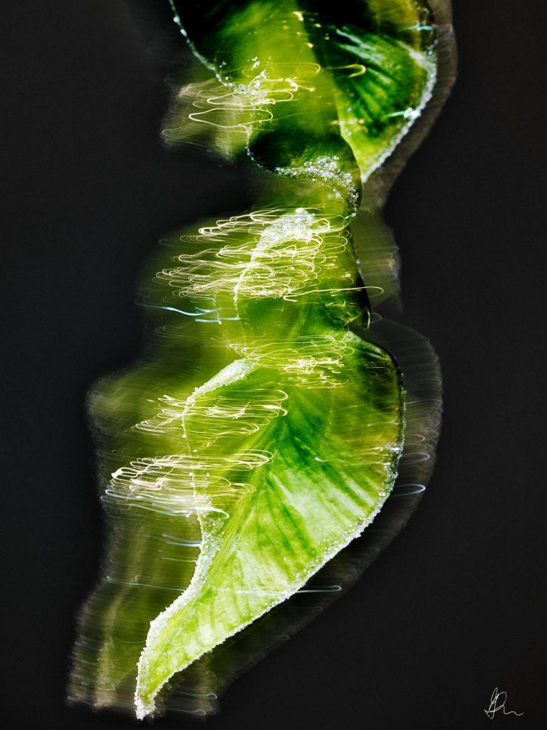 Gidel Flowerz