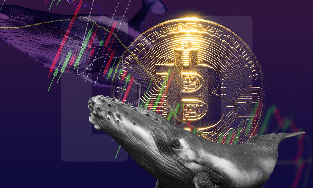 Análisis post-caída de Bitcoin ¿Las ballenas compran o venden BTC?